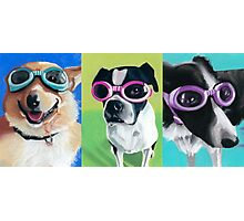 Dogs in Goggles Photographic Print