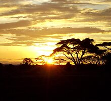 African Sunset by jacqi