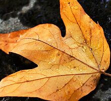 fall has fallen by Candy Gemmill