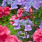 Bigleaf Hydrangea Flowers by Henry Beeker