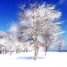 snow tree by brian gregory