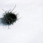 fallen nest by lucamaphoto
