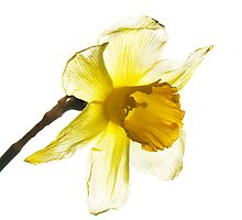 Yellow transparency by Csaba Jekkel