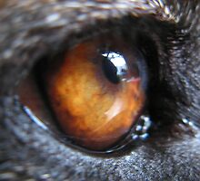GERMAN SHEPERD DOG EYE by SofiaYoushi