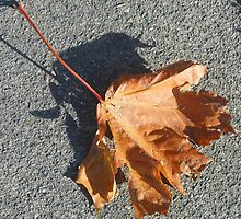 Me and my Shadow - Fallen Sycamore Leaf by MidnightMelody
