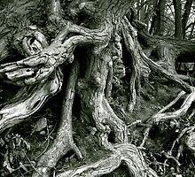 Wild Growing Tree Roots by JonHanson