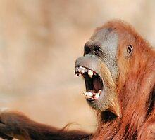 primal yawn by Lenny La Rue, IPA