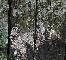 HDR Composite - Lichen Texture on Decaying Picnic Table 2 by wetdryvac