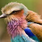 Lilac Breasted Roller by Peter Bland