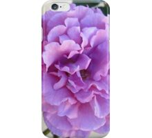 Rosa 'Angel Face' iPhone Case/Skin