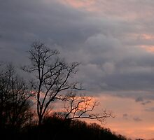 Evening Sky in Kentucky by Anna  Wilson