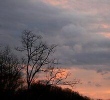 Evening Sky in Kentucky by Anna  Wilson
