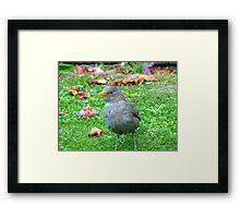 I Could Be A Collectors Item... - Blackbird - NZ Framed Print