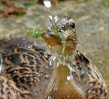 Rain Drops Keep Falling On My Head ♫♫ - Duckling - NZ by AndreaEL