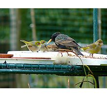 Are You My Wet-Nurse? - Silver-Eye/Starling - NZ Photographic Print