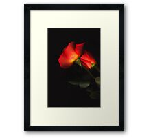 Perfectly Roses Framed Print