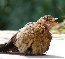 If I Sunbathe Long Enough I'll Turn Into A Blackbird - NZ by AndreaEL