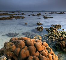 Reef Tide by Robert Mullner