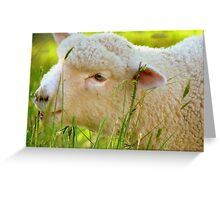Don't Forget To Eat Your Greens - Lamb - NZ Greeting Card