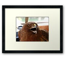 Yipeee!!... I'm Off To The Vet! - Harrier Hawk - NZ Framed Print