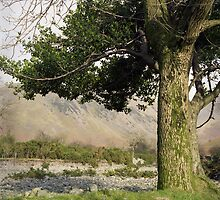 Holly Tree, Wasdale by John Kiely