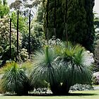 Flowing Grass Trees Australia by Sandra  Sengstock-Miller