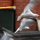 Seagulls at Vic Market by swivalimages