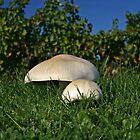 Mushroom family by Zal Lazkowicz