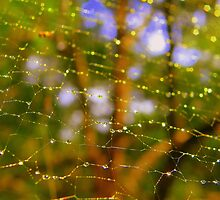 WEB ENVY by Tracy A Smith