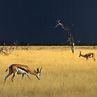 Etosha Storm by Peter Bland