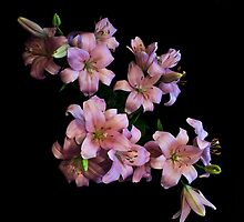 Pink Lilies by Michael Jordan