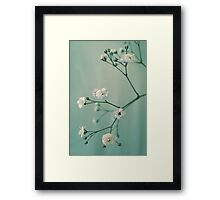 Gypsophila Framed Print
