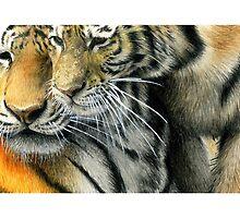 Wild Attraction by Eleanor Milligan