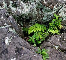HDR Composite - Small Quiet Fern and Lichen Garden by wetdryvac