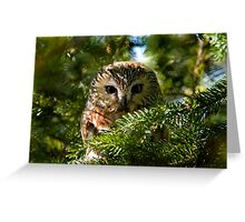 Northern Saw Whet Owl - Amherst Island, Ontario, Canada Greeting Card