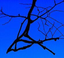 Black and Blu 2 by Lynda Kerr