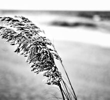 Sea Oats Black and White by coreyann