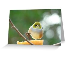 Isn't Possession  9/10ths Of The Law? - Silver-Eye - NZ Greeting Card