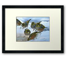 Don't Stare... It's Rude!! - Silver-Eyes - NZ Framed Print