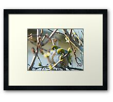 Love Is... Snuggling Up On A Cold Winters Day.. - Silver-Eyes - NZ Framed Print