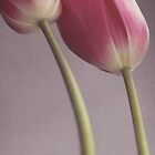 Two pink tulips by DonatellaLoi