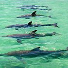 Dolphin Line up by jenitae