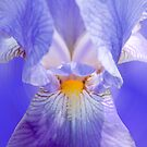 Blue Iris by Sarah McKoy