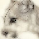 Cougar no 3  by Siamesecat