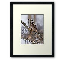 Northern Hawk Owl on branch Framed Print