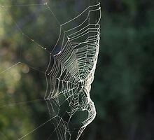 Sunset Web by Kylie Callander