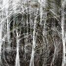 Forest Vortex... by Daniel  Parent