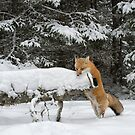 Discovering Snow... by Daniel  Parent