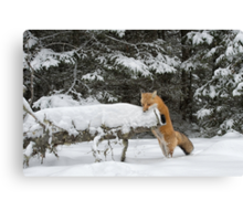 Discovering Snow... Canvas Print