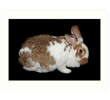 California Giant Bunny Art Print